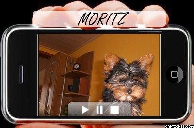 "MORITZ<a href=""profile.php?lookup=133""> - moritz</a><br/> 		         Komentarzy: 0  Obejrzano:  9757 Ocena: <img src=""images/star.gif"" alt=""*"" style=""vertical-align:middle""/><img src=""images/star.gif"" alt=""*"" style=""vertical-align:middle""/><img src=""images/star.gif"" alt=""*"" style=""vertical-align:middle""/><img src=""images/star.gif"" alt=""*"" style=""vertical-align:middle""/><img src=""images/star.gif"" alt=""*"" style=""vertical-align:middle""/>"
